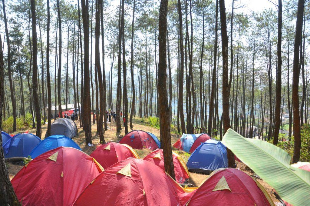 Exclusive Camp Golden Pines ( Desa Wisata Kungkuk)