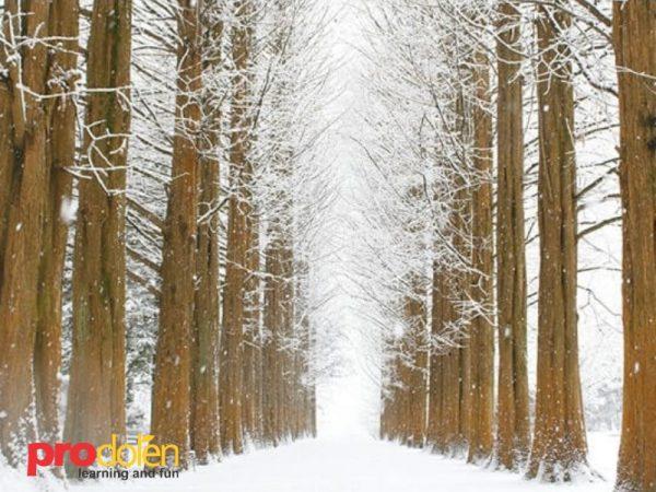 Paket Wisata Winter Korea 5D4N